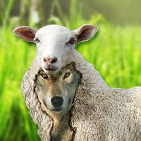Qu'est ce qu'un faux prophète ?