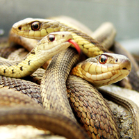 J. Chambers dénonce l'esprit du serpent