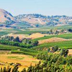 Colonisation, terre de Palestine et lieux saints